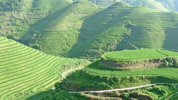 rice terrace banaue