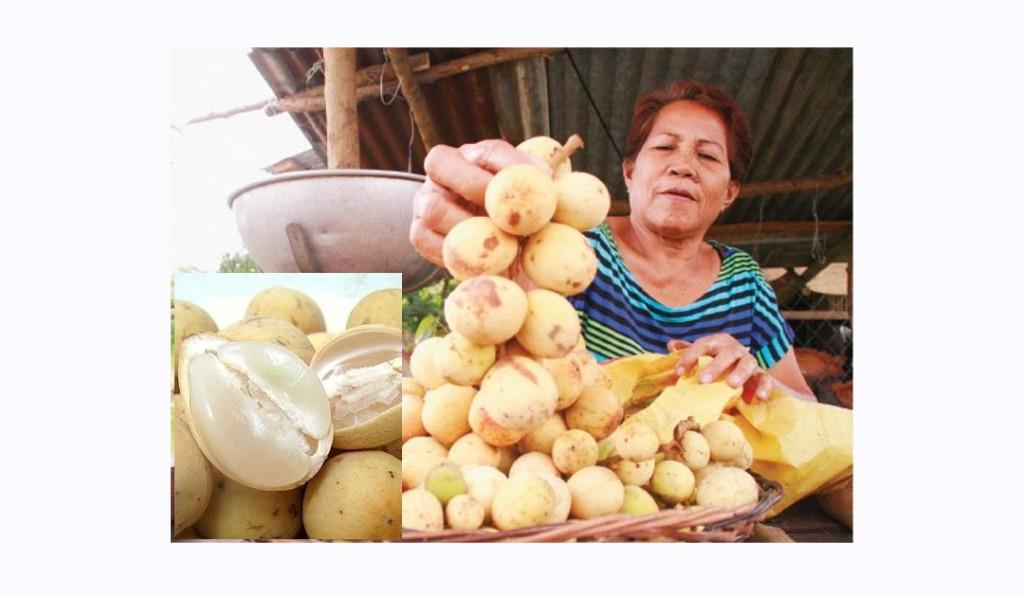 フィリピンの代表的なフルーツ「ランソネス」 (Lanzones)